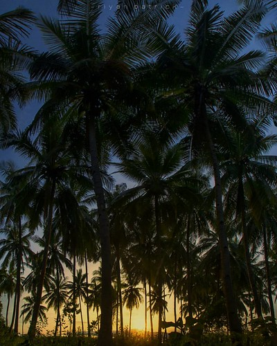 Lianglolong - Pantar Island 🌴🌄  #sunrise #alorisland #alor #landscape #nature #adventure #beach #bajaklaut_id #sunrisehunter #lensantt #explorealor #coconuttrees #serikat_fi #explorealor #geonusantara #tanahtimur #indonesi