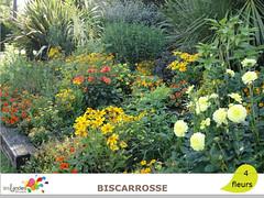 biscarrosse (Tourisme Landes) Tags: landes fleurs vvf