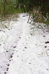 Pfad im Schnee (shortscale) Tags: wald schnee spur smcpentaxm11750mm