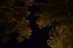 Window on the stars (ginevrachini) Tags: stars outside lonngexpo trees tree sky dark night nocturne exposure italy tuscany maremma alberi italia nikonitalia