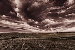 The Never-Ending Sky (J Swanstrom (Check out my albums)) Tags: sky landscape cloudscape field prairie southdakota nikon d750 jswanstromphotography pickerellake selective color monochrome mono bw contrast texture pattern expanse bigsky rural horizon