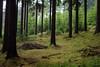 Ještěd (kaddafi210) Tags: pancolar 50mm pancolar1850 1850 m42 samsung samsungnx210 mirrorless czech retro carlzeissjena ausjena gdr nature forest place