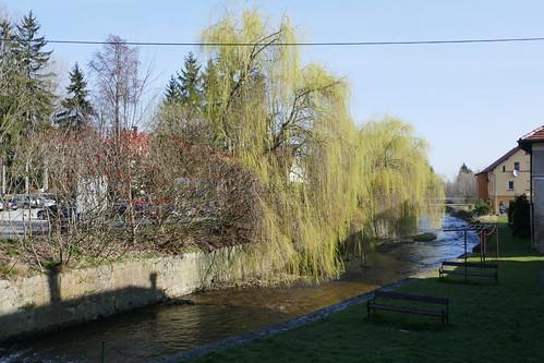 Wiosenne wierzby nad Bystrzycą Dusznicką w Polanicy-Zdroju z mostu przy Dąbrowskiego