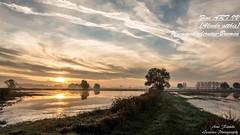 Eisvogel,Wümmeniederung-Bremen©Arne Flemke (Cristoforo Colombo) Tags: eisvogel bremen wümme wümmewiesen kingfisher