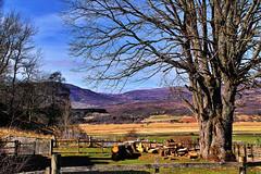 Invertromie (Fr Paul Hackett) Tags: landscape farmland trees field mountain hillside sky