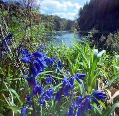 Dry Ayr (wheehamx) Tags: river ayr pinhole colour