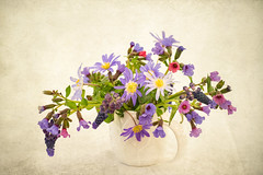 Muscari, Anemones and Pulmonaria (photoart33) Tags: spring flowers muscari anemone pulmonaria stilllife jug purples blues textured