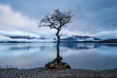Milarrochy Tree (Willem Eelsing) Tags: milarrochy scotland uk balmaha tree longexposure
