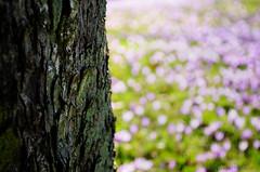 Schlosspark Husum (Gelegenheitsknipser) Tags: marcopagel mpfotonet gelegenheitsknipserde 2011 norddeutschland deutschland schleswigholstein sh husum kreisnordfriesland nf schlosspark schlossvorhusum husumerschloss schloss krokusblã¼te krokus krokusse ausflugsziel blã¼ten blã¼te pflanze