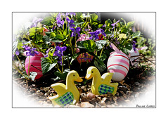 """They're Not My Eggs, Are They Your Eggs!"" (paulinecurrey) Tags: smileonsaturday eggs easter ducks vignettedetail details colorful colourful plant leaf leaves violets outdoors sunny sunshine creative texture art artistic canon digital bright happyeaster"