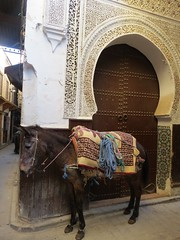 Fez Mule (tom_2014) Tags: fez mule donkey fes city town old oldtown morocco moroccan africa african mahgreb berber northafrica unesco worldheritage worldheritagesite mammal equine doorway art portal carving architecture building mosque islam islamic islamicarchitecture medina mdina