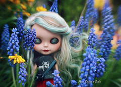Snaggle (pure_embers) Tags: pure embers blythe doll dolls laura england uk custom curia spilt milk blythes emberscuria takara neo ebl blue hair alpaca reroot girl photography wild camera flowers lensbaby
