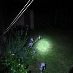 iris by flashlight 4717 thumbnail