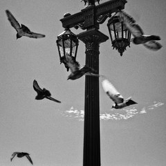 Bandada y Farola (chwmax) Tags: pajaros palomas birds farola farol streetlight photography photo foto fotografía pigeons bandada flock