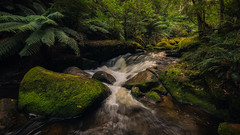 Toorongo River (Chas56) Tags: river toorongoriver flow water stream rocks rapids ndfilter longexposure rainforest canon canon5dmkiii victoria australia moss ferns treeferns ngc forest creek