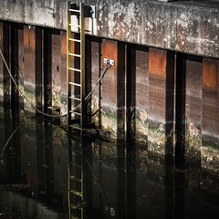Going down (real ramona) Tags: steps ladder dock water rusty murky chain
