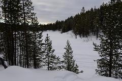 DAV_0365 Bosque alrededor del lago Inari (David Barrio López) Tags: arbol tree pino siida sajos sami circulopolarartico arcticcircle holidayvillageinarihotel lomakyläinari reno reindeer poro nieve snow aurora boreal auroraboreal northernlights auroraborealis polarlights inari ivalo laponia lapland finlandia finland nikon d610 nikond610 nikkor2470mm 2470mm afsnikkor2470mmf28ged davidbarriolópez davidbarrio