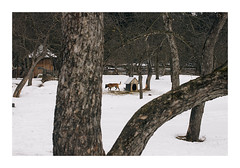 Dog Day Afternoon (Florin Aioanei) Tags: dog winter nature trees romania florin aioanei