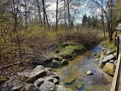 The stream in spring (walneylad) Tags: loutetpark northvancouver britishcolumbia canada park parkland urbanpark woods woodland forest rainforest urbanforest trees ferns moss trail bridge grey clouds sun sunshine april spring blue brown green yellow scenery view nature sky