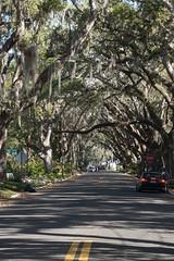 Magnolia Avenue Oak Trees, St. Augustine (mattk1979) Tags: staugustine oldest city spanish colonial atlantic coast florida usa unitedstatesofamerica magnoliaavenue old oak canopy moss street