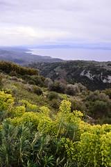 (Leela Channer) Tags: flowers yellow landscape sky nature hills sea mountains scenery grey spring euphorbiacharacias