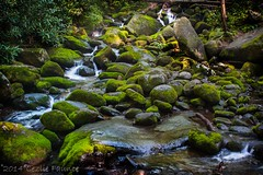 Roaring Fork Motor Wilderness Trail (lezlievachon) Tags: