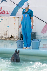 DSC_1495.jpg (d3_plus) Tags: sea sky nature field japan port aquarium countryside scenery dolphin chiba  ricefield       j4 choshi   fineday   bottlenosedolphin  fishingport   dolphinshow    nikon1    tokawa  1nikkorvr10100mmf456 1 nikon1j4  inubosakimarinepark