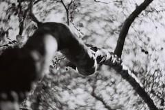 """Back in Black."" (morsini1) Tags: chile santiago bw analog arbol blackwhite bokeh bn 35mmfilm cielo nikonf ilfordpanf bancoynegro d76stock 65min petzval lomographyzenitpetzvalartlens85mmf22"