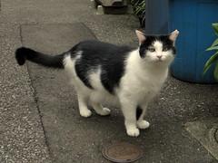 Cute cat (Matt-san) Tags: