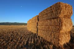 Montana Morning, Flathead Valley (Will Stuart) Tags: kalispell flatheadvalley