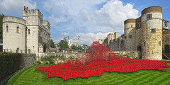 Tower of London Remembers (Loe Giesen) Tags: london poppies toweroflondon whitetower redflowers londonpoppies bloodsweptlandsandseasofred toweroflondonremembers