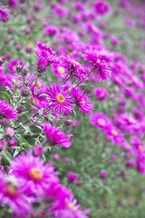 IMG_7419 (Hotpixler) Tags: flowers canon 50mm blumen mc pentacon f18 60d multicoated
