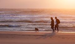 Beachwalking at Sunset (RobK1964) Tags: dog beach strand thenetherlands denhaag thehague kijkduin