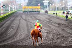 Dos potos hacia mi (Lissette Sánchez) Tags: caballo septiembre 18 jinete carrera chilena fiestaspatrias clubhipico hualpen