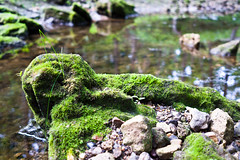 Maquoketa Caves State Park (Phil Roeder) Tags: park leica nature moss iowa caves maquoketacavesstatepark leicax2