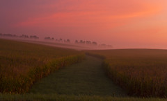 9821HENa (preacher43) Tags: morning autumn mist rural sunrise early illinois corn foggy geneseo henrycounty