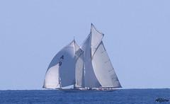 Vele22 (photoalfiero) Tags: ocean sea italy water sailboat boat barco ship barcos liguria streetphotography nave sail tallship vela navegar marinas veliero tirreno barchedepoca barcheavela lesignoredelmare lestradeparlanoimuriurlano