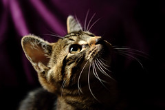 Cassidy (martin mchale) Tags: cats pets cute animals kittens