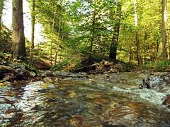Vallon du Ninglinspo (Ld\/) Tags: nature beauty forest waterfall belgium belgique walk top awesome promenade fort wallonie valle vallon ninglinspo aywaille drouet amblve stoumont