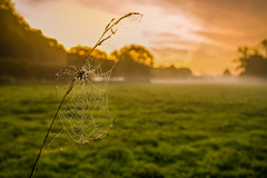 Morning Light (dkphotographs) Tags: morning autumn trees light red sky orange sun sunlight macro fall net nature water beautiful field yellow misty fog clouds rural sunrise fence landscape countryside spider drops wildlife country spiderweb foggy cobweb hazy dropsofwater sonyslta57 sonyalpha57