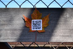 Sonnet 73, 05 (oschene) Tags: williamshakespeare qrcode northamptonma sonnet73 digitalgraffiti