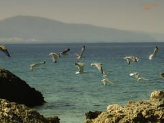Seagulls (aspinoulas67) Tags: travel sea vacation sky seagulls tourism nature canon landscape flying rocks view greece akrata