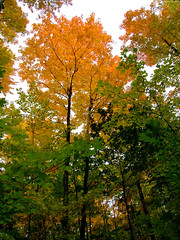 """Fiery Orange Treetops • <a style=""""font-size:0.8em;"""" href=""""http://www.flickr.com/photos/34843984@N07/15237041108/"""" target=""""_blank"""">View on Flickr</a>"""