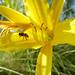 bee the sunshine you desire : sacramento, california (2014)