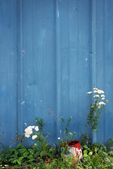 Blue Shed (pantagrapher) Tags: county door blue wisconsin island washington nikon paint shed can d600