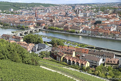 Wrzburg (Hiury Tarouco) Tags: germany wine grapes grape wrzburg