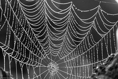 The web (Henrik.Sandstream) Tags: mist macro water web 100mm 500v50f 6d dropps