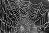 The web (Henrik.Sandstream) Tags: mist macro water web 100mm 500v50f 6d dropps