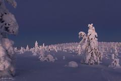 Polar Night at Fell Kuer (markus.kiili) Tags: winter finland arctic lapland polar fell kuer äkäslompolo yllas ylläs tykky kuertunturi
