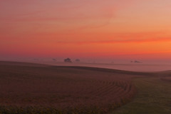 9819HENa (preacher43) Tags: morning autumn mist rural early illinois corn foggy geneseo henrycounty